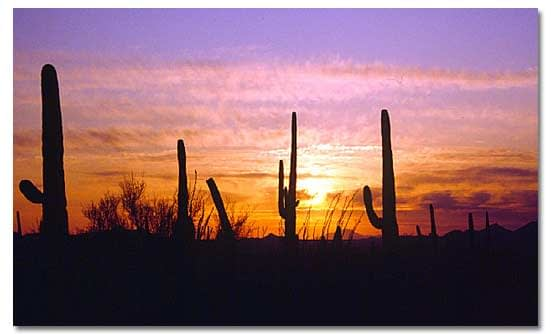 The Sonoran Desert Mexico USA-thatviralfeedcdn